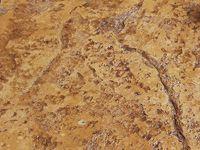 Jumbo Stone Stamp Beige With Dark Brown Accent
