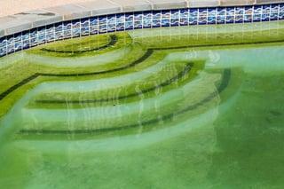 Pool algae on pool steps