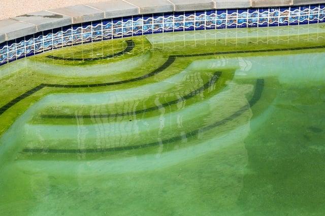 Pool algae - how concrete pools compare to vinyl liner pools in algae resistance