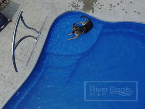 German shepherd lying on tanning ledge of inground fiberglass pool