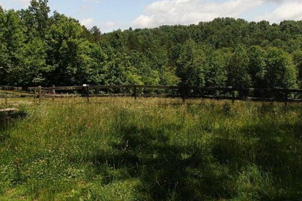 plain backyard