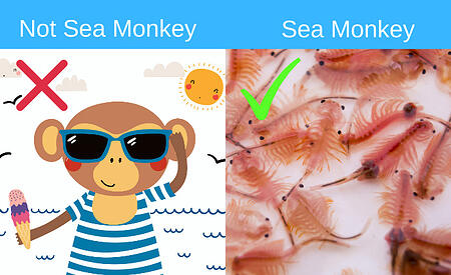 Sea monkey diagram - types of salt for inground saltwater pools