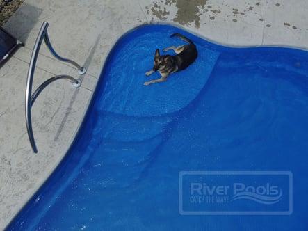 Dog on a tanning ledge enjoying the water