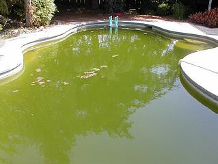 Pool with green algae in the water