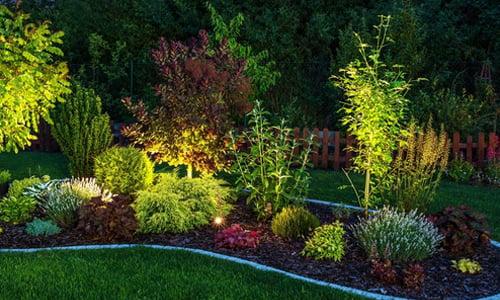 Spotlights uplighting plants