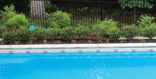 poolside shrubbery for a G36 fiberglass pool