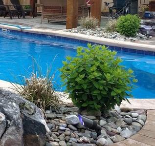 poolside greenery for an O30 fiberglass pool