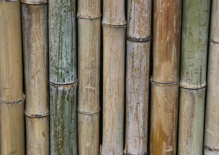 Bamboo pool fence
