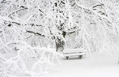 A park bench and tree covered in snow