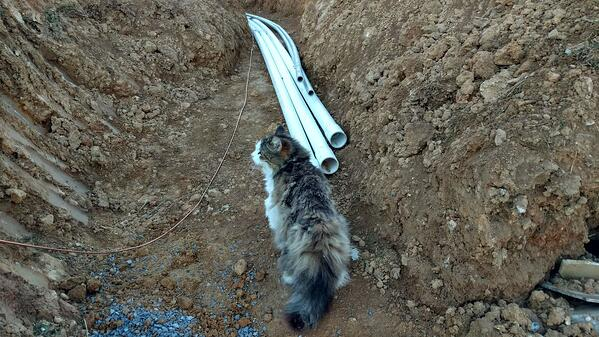 Cat with PVC pipes at pool construction site
