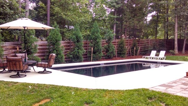 Evergreens along rectangular pool