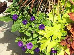 The Best And Worst Plants To Use In Pool Landscaping